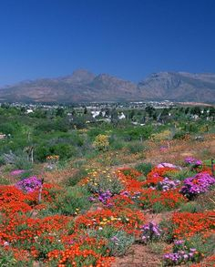 Karoo National Botanical Gardens, Worcester, South Africa