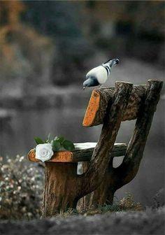 Black and White Photography Beautiful Landscape Photography, Beautiful Landscapes, Amazing Photography, Splash Photography, City Photography, Beautiful Birds, Beautiful Images, Wonderful Flowers, Color Splash