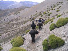Mendoza - Por la Cordillera