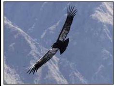 El Condor Pasa (If I Could) - Simon & Garfunkel (Lyrics on screen) - YouTube