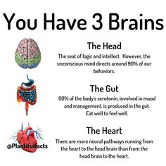 Gut Brain, Brain Health, Gut Health, Mental Health, Neural Connections, Courge Spaghetti, Getting A Massage, Learn To Meditate, Holistic Healing