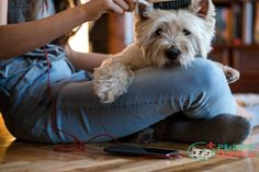 Now it comes to choosing the best dog brush to keep your dog healthy and happy.