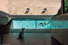 Inside the coolest houses in Australia owned by renowned architects #dailymail