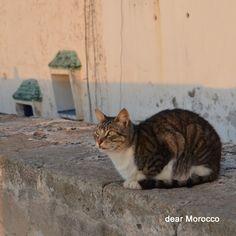 Cat // Essaouira // Morocco