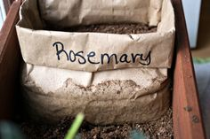 DIY Seed Starter using a paper sack.  It works!