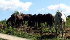 Horses / Clickasnap My Photos, Sky, Horses, Animals, Heaven, Animales, Animaux, Heavens, Horse