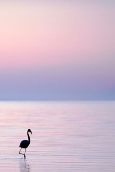 Getting lost in the pastel hues of the Camargue Cute Wallpapers, Wallpaper Backgrounds, Trendy Wallpaper, Beach Wallpaper, Animal Wallpaper, Screen Wallpaper, Rose Quartz Serenity, Jolie Photo, Pastel Colors