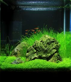 10 Tips on Designing a Freshwater Nature Aquarium Aquarium Garden, Aquarium Landscape, Nature Aquarium, Planted Aquarium, Aquascaping, Saltwater Aquarium Fish, Freshwater Aquarium, Betta Tank, Fish Tank