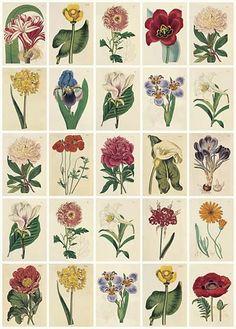 Botanical Canvases