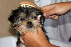 Give a Small Dog a Bath Step 4.jpg