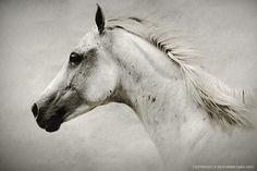 The Horses by Dimitar Hristov