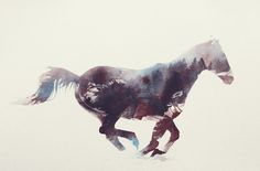 Poster | HORSE von Andreas Lie | more posters at http://moreposter.de