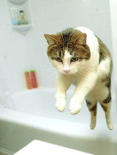 makin the grand cat escape