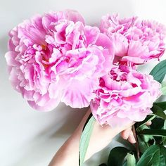 Is there anything more vital to living than fluffy peonies? Okay, so maybe a few things like sleeping, breathing etc but peonies are pretty important too, right?!