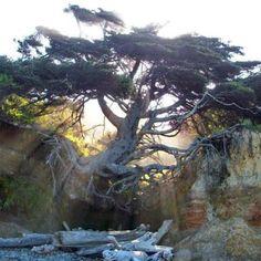 Sun, roots