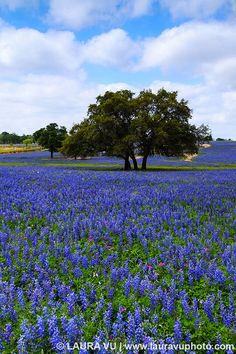 Days of Summer – Atascosa County, Texas by Laura Vu Photo, via Flickr