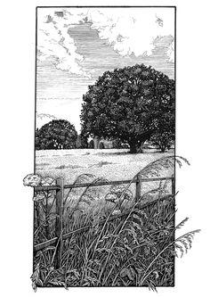 Freelance Illustrator, pen and ink artists and designer. Pen Illustration, Ink Illustrations, Landscape Illustration, Ink Pen Art, Ink Pen Drawings, Landscape Sketch, Landscape Drawings, Hatch Art, Art Sketchbook