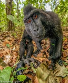 The macaques were more than happy to work it for the camera - hanging from trees, posing with fruit, and even inspecting the lens to help ta...