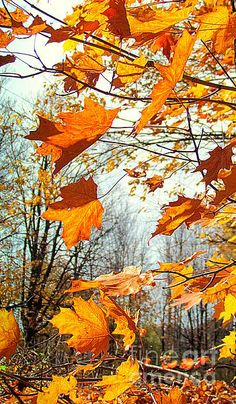 Apres Midi Dautomne autumn leaves will fall Autumn Scenes, Seasons Of The Year, Fall Pictures, Autumn Day, Winter, Autumn Inspiration, Belle Photo, Fall Halloween, Mother Nature