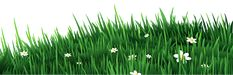 Transparent Grass with White Daisies PNG Clipart
