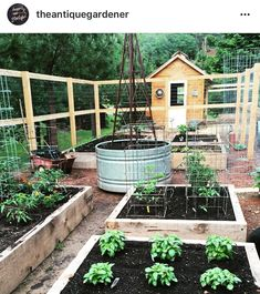 My friend @theantiquegardener has the sweetest garden and chicken coop. I've been telling her she needs to sell the plans for her chicken coop in her shop @theantiquegardener . It is too cute and very functional.