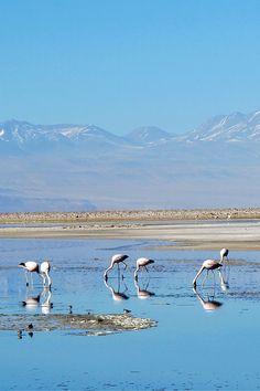 Chile's Atacama Desert, South America To book go to www.notjusttravel.com/anglia