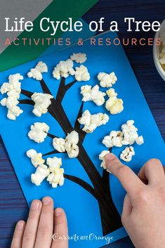 Learn loads of fun facts about trees and learning resources for your preschoolers and kindergartners. This post includes activities and crafts to help kids embrace a love of learning about botany. Facts For Kids, Fun Facts, Evergreen Trees, Deciduous Trees, Large Plants, Help Kids, Growing Tree, Life Cycles