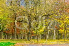 Qdiz Stock Photos | Cluster of Trees with Autumn Colorful Foliage,  #autumn #background #beautiful #beauty #blue #branch #cluster #colorful #day #environment #foliage #golden #grass #green #ground #idyllic #land #landscape #leaf #leaves #multicolored #nature #nobody #outdoors #park #plant #road #scenery #scenic #season #tranquil #tree #view #weather #wood #yellow