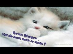 Cute Cats And Kittens And Dogs Cute Kittens Background Cute Kittens, Cats And Kittens, I Love Cats, Crazy Cats, White Persian Kittens, Image Chat, Photo Chat, Good Night Sweet Dreams, Nighty Night