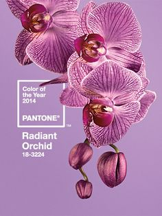 Pantone's Colour of the Year for 2014 is Radiant Orchid!