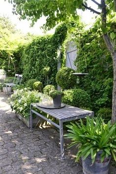 Shade Garden Ideas Starting a Shade Garden Shade Garden Ideas. The shade garden can be exploding with color and texture. No matter how much shade is in your landscape, the right flowers, plants, bu… White Gardens, Small Gardens, Outdoor Gardens, Garden Cottage, Garden Whimsy, Garden Living, Garden Spaces, Shade Garden, Dream Garden