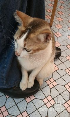 On My Shoes by Cheung King Man  Photograph   Capture one cutie cat steps on my shoes when we are first meeting in Hong Kong. He feels comfortable at that moment after his lunch , ha...!