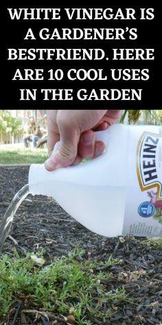 Garden Ideas To Make, Diy Garden Projects, Backyard Farming, Backyard Landscaping, Gardening For Beginners, Gardening Tips, Home Vegetable Garden, Growing Vegetables, Gardening Vegetables