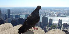 Google « Pigeon », la nouvelle mouture de l'algorithme local
