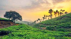munnar in day