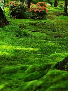 Moss garden, Saiho-ji, Kyoto.西芳寺。苔庭。