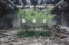 """Camilo José Vergara's photo of the derelict reading room of the Camden Free Library in New Jersey, a thicket of saplings reaches toward a tattered ceiling's filtered light. Historian Elizabeth Blackmar detects in Vergara's photos an """"aesthetic pause,"""" which leads us to wonder how we could have avoided the wasting away of these 20th-century landmarks—and to reflect on what we are to learn from their demise."""