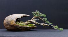 hawthorn bonsai