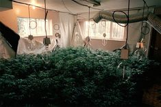 A Look Inside Illegal Canadian Weed Grow Houses from the Lemonade Video, 1990s, Earthy, Ceiling Lights, Weed, Plants, Houses, Homes, Marijuana Plants