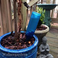 wine bottle watering device with copper tubing for container gardens, kitchen design, repurposing upcycling, The bottle is buried up to its neck once installed