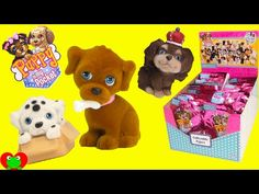 Puppy In My Pocket - YouTube