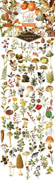 Illustration Art Vintage - Field & Forest Vintage Botanicals by Eclectic Anthology on Creative Market