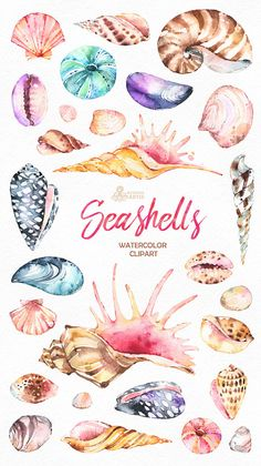 Seashells. 27 Watercolor handpainted Clipart. Nautical, beach, marine, shells, sink, holiday, invita