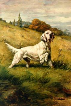 Count Gladstone IV, First National Field Dog Champ, 1896