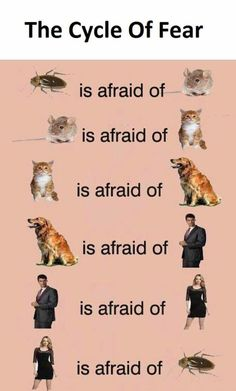 The cycle of fear
