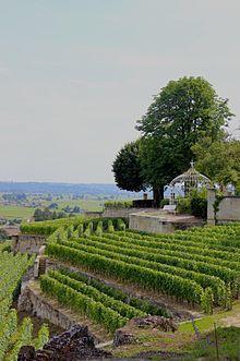 Château Ausone —5) CHATEAU AUSONNE, LE VIN: Environ 15000 à 18000 bouteilles se château Ausone sont produites chaque année. Château Ausone constitue l'archétype du vin puissant et très aromatique de St-Emilion, doublé d'un caractère propre au terroir calcaire du château qui s'exprime par une grande minéralisation et un style très en longueur accompagné d'une grande fraîcheur.