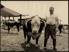 MAN POSING ON FARM WITH COW VINTAGE PHOTO/SNAPSHOT