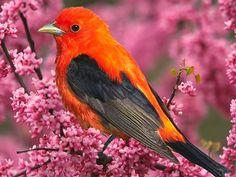 Lindo passarinho vermelho pousado em galho de flores