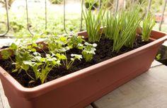 Com uma horta orgânica em um vaso você consegue os mesmos resultados que em uma horta comum (Foto: mulher.uol.com.br)