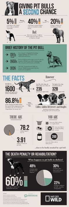 """""""This #infographic provides a deeper look into the #truth #about the #pitbull #breed.""""  Where do you stand on this? ~ any bad dog, regardless of breed, starts with bad owners. Love my Pitt."""